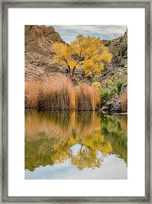 Autumn Reflection At Boyce Thompson Arboretum Framed Print