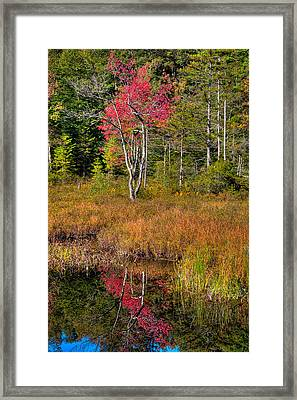 Autumn Reflections On Cary Lake Framed Print