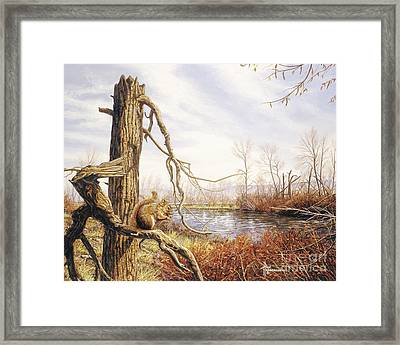 Autumn River-red Squirrel Framed Print