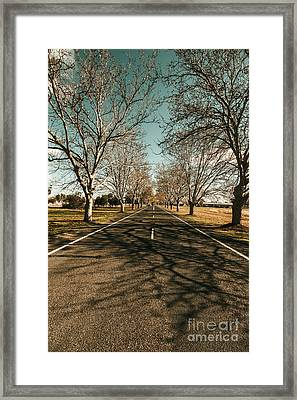 Autumn Roads And Leafless Trees Framed Print
