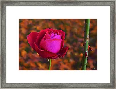 Framed Print featuring the photograph Autumn Rose by Isabella F Abbie Shores FRSA