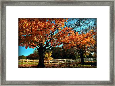 Framed Print featuring the photograph Autumn Rows by Joan  Minchak
