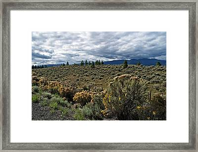 Autumn Sage And Grasses Framed Print