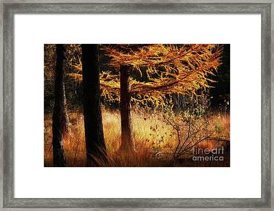Autumn Scene In A Dark Forest Framed Print by Nick Biemans