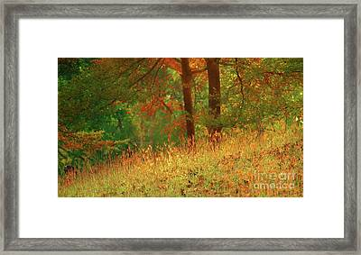 Autumn Scene In The Forest Framed Print by Yali Shi