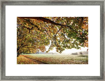 Autumn Scene With Overhanging Trees Framed Print