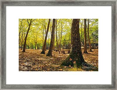 Autumn Scenery Framed Print by Carlos Caetano