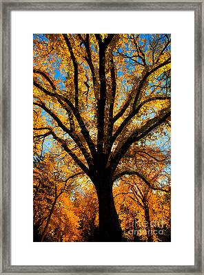 Autumn Season 4 Framed Print