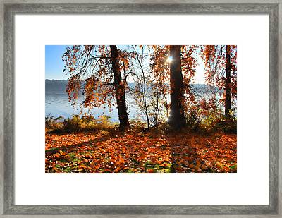 Autumn. Framed Print by Sergey and Svetlana Nassyrov
