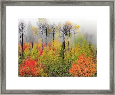 Autumn Shades Framed Print by Leland D Howard