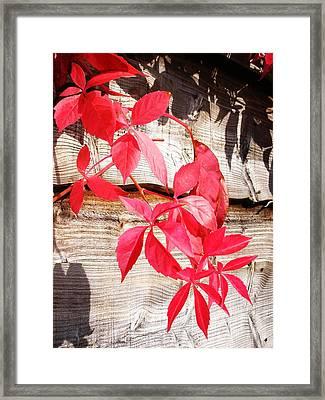 Autumn Shadows Framed Print by Lucia Del