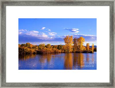 Autumn Shimmering Framed Print by Barbara Schultheis