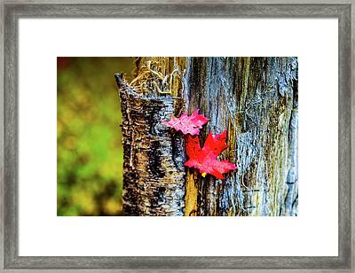 Autumn Silence Framed Print