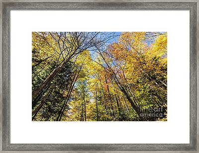 Framed Print featuring the photograph Autumn Skies by Anthony Baatz