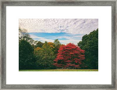 Autumn Skies Framed Print