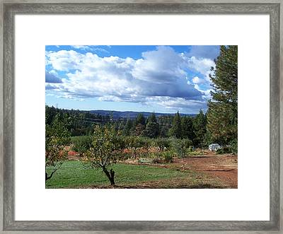 Autumn Sky At Apple Hill Framed Print by Dawn Marie Black