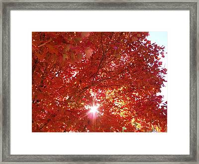 Autumn Sky IIi Framed Print by Anna Villarreal Garbis