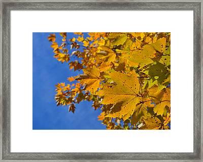 Autumn Sky Framed Print by JAMART Photography