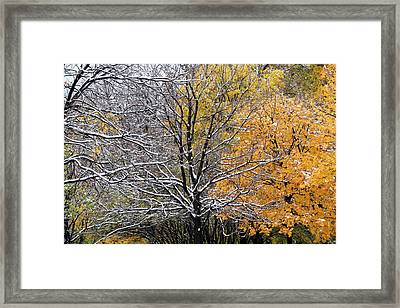 Framed Print featuring the photograph Autumn Snow by Doris Potter