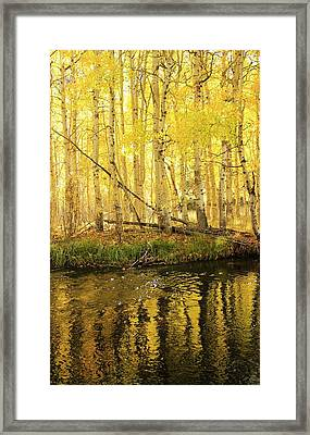 Autumn Soft Light In Stream Framed Print