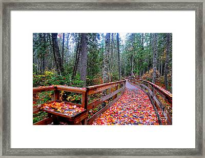 Autumn Solitude  Framed Print by Catherine Reusch Daley
