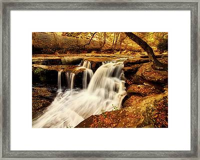 Autumn Solitude Framed Print by L O C