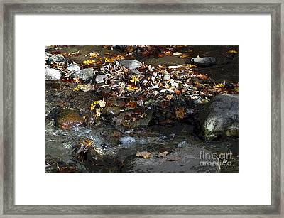 Autumn Soup Framed Print by Diane E Berry