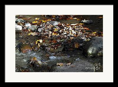 Autumn Soup Framed Prints