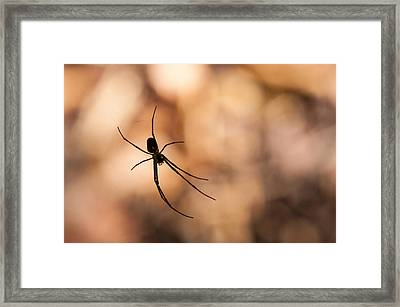 Autumn Spider Framed Print
