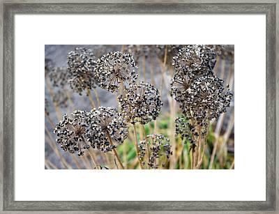 Autumn Spirals Framed Print by Josie Duff