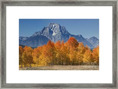 Autumn Splendor In Grand Teton Framed Print by Sandra Bronstein