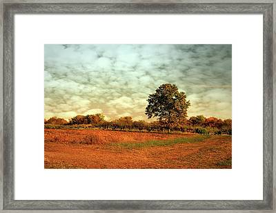 Autumn Splendor In The Orchard - Battlefield Orchards Framed Print by Angie Tirado