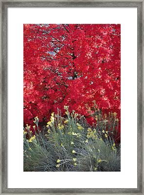Autumn Splendor In Zion National Park Framed Print by Bruce Gourley