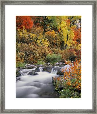 Autumn Splendor Framed Print by Leland D Howard