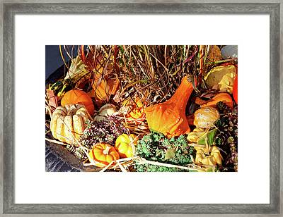 Autumn - Squash - Feeling Squashed Framed Print