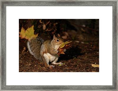 Autumn Squirrel Framed Print