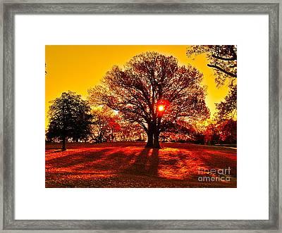 Autumn Sun And Shadows Framed Print by E Robert Dee
