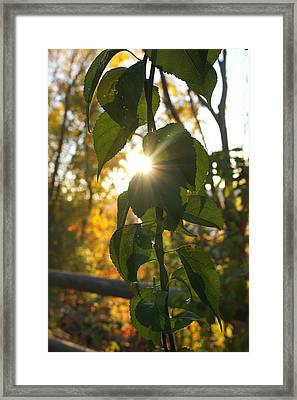 Autumn Sun Breaking Through The Leaves Framed Print by Lilia D