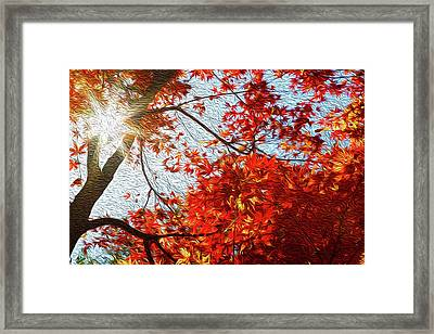 Autumn Sun Framed Print by Les Cunliffe