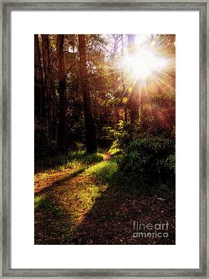 Autumn Sunburst And Shadows By Kaye Menner Framed Print
