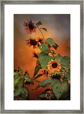 Autumn Sunflowers Framed Print by Theresa Campbell