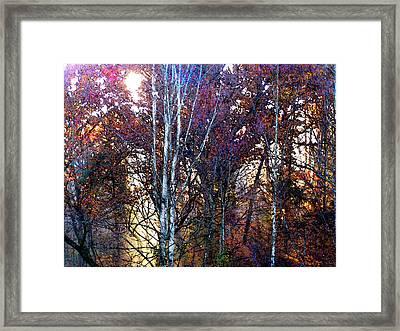 Autumn Sunlight Framed Print by Jane Schnetlage