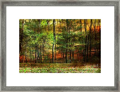 Autumn Sunset - In The Woods Framed Print by Judy Palkimas