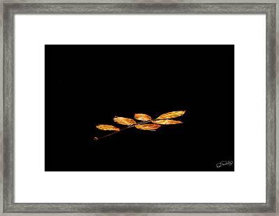 Autumn Suspended Framed Print