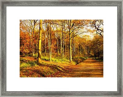 Autumn Framed Print by Svetlana Sewell