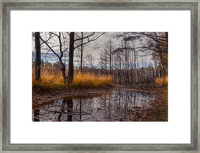 Autumn Swamp Framed Print