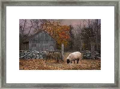 Autumn Sweater Framed Print by Robin-Lee Vieira