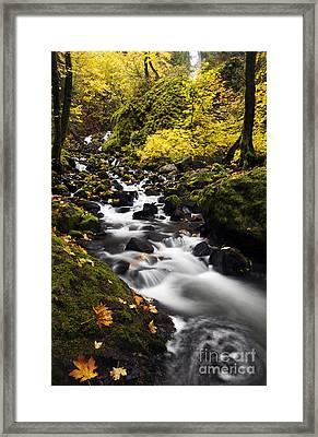 Autumn Swirl Framed Print by Mike  Dawson