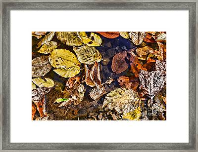 Autumn The Color Of Nature Framed Print