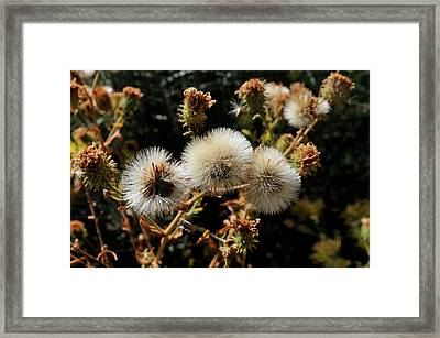 Autumn Thistle Framed Print